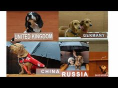 United Nations gone to the dogs