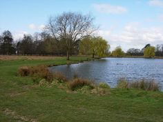Bushy Park in London Step by Step Guide #London #stepbystep