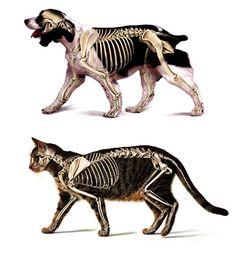 Medical illustrations. Illustrators Beau and Alan Daniels. I want yer bones.