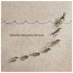 "132 Likes, 14 Comments - Jason Yi (@flytying.maniac) on Instagram: ""Mayfly Lifecycle Series #flyfish #flytying #flyfishing #flytyingporn #flytyingaddict…"""