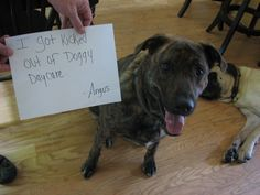 I got kicked out of doggie daycare. Angus