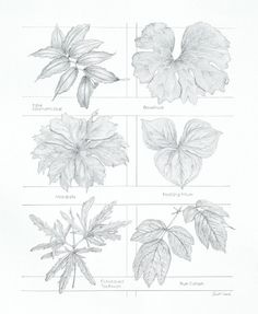 Wildflower Leaf Survey - graphite pencil by CCreech Studio. Created for the Legacy of the Land Through Art Exhibit (Legacy Land Conservancy) | Flickr - Photo Sharing!