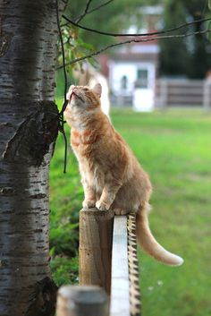 Birdwatching by Turnip Towers on 500px