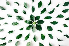 #Green leaf pattern  Green leaf pattern on white background. Flat lay composition for bloggers websites business owners designers magazines social media and artists. This purchase includes one high resolution horizontal digital image. Image is a sRBG jpg and is approximately 3901x2601 pixels. License terms: http://ift.tt/1W9AIer