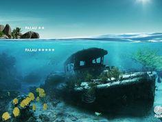 PADI:  Palau