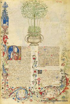 """CONSIGLI DAL MEDIOEVO: LA MAGGIORANA - """"La maggiorana è un'erba fortemente profumata. Il suo succo unito al miele schiarisce i lividi e si usa nelle slogature, soprattutto se impiastricciata con polenta. È noto che i sorci volentieri la insidiano"""". Dal codice """"Historia Plantarum"""", fine XIV secolo."""