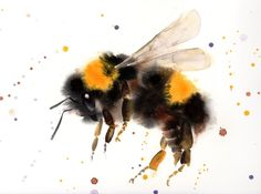 Bumblebee in flight - Bumblebee watercolor painting - Bumble Bee - Nature Illustration - Flying Bumblebee - insect art - Full-frontal image, unframed Watercolor Paintings Of Animals, Animal Paintings, Watercolor Art, Botanical Illustration, Illustration Art, Bee Painting, Insect Art, Bee Art, Wildlife Art