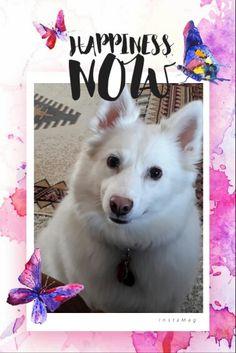 My Niki Dogg ♡♡♡♡♡♡♡♡♡♡♡