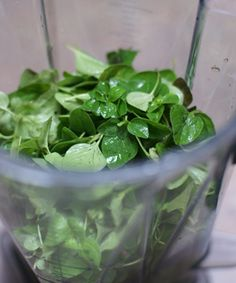 How to Freeze Fresh Herbs including my best Pesto recipe | 5DollarDinners.com