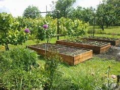 Vegetable Garden, Vegetables, Plants, Gardening, Vegetables Garden, Lawn And Garden, Vegetable Recipes, Vegetable Gardening, Plant