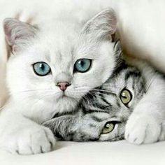 (via Pin by G e r r i e Fijneman on Love Cats | Pinterest)