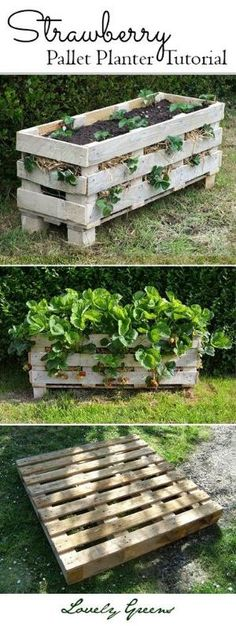 Grow strawberries in small spaces with this project tutorial on how to build and plant up a better Strawberry planter using a single wooden pallet #gardening by liat shanan