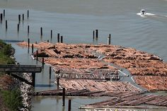 Log booms on southern bank of Fraser River, New Westminster, BC, Canada.  Photo: Joseph Boltrukiewicz