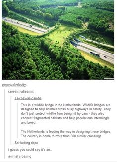 I live in the Netherlands and i've never seen a bridge like this. <<--- so they might not be real? That's sad, they look freaking awesome Tumblr Stuff, Tumblr Posts, Faith In Humanity Restored, Jolie Photo, Tumblr Funny, Mind Blown, Animal Crossing, Fun Facts, Random Facts