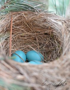 Something about Robin eggs that speaks to me.