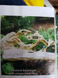 Tree stump seat Wisley