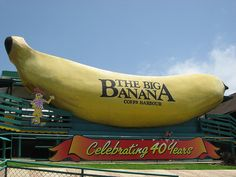 One of the early 'big things' in Australia, was the Big Banana at Coffs Harbour, NSW. Banana growing is now much reduced the district. Coast Australia, Australia Living, Australia Travel, Queensland Australia, Places To See, Places Ive Been, Roadside Attractions, Along The Way, Wonderful Places