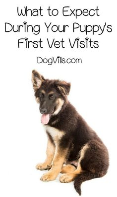 Caring for a new puppy can be confusing, especially with so many different opinions on things like vaccines and worming. Check out what to expect during your first vet visits and dispel a bit of the confusion!