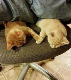 Foto : Katzenpfoten - Durch das Band äh Pfote der Liebe vereint ...