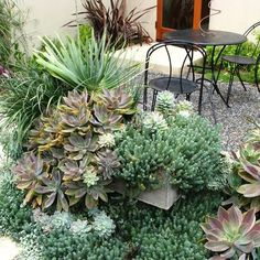 Arizona · Courtyard · Desert Landscape Design, Pictures, Remodel, Decor and Ideas - page 4