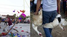 Piñatas Full of LIVE Animals Bashed in Mexican Town! Take Action Now! | YouSignAnimals.org