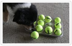 Muffin Tin Game for Dogs (& Cats!)
