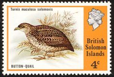 Red-backed Buttonquail stamps - mainly images - gallery format