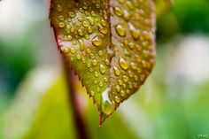 after the spring rain by Alper Orus Rainy Season, Moth, Insects, Seasons, Spring, Seasons Of The Year