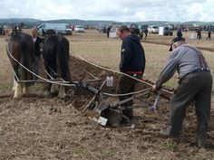 Helping My Father at All Ireland Ploughing with his Irish Cob Horses Crudger & Gerry