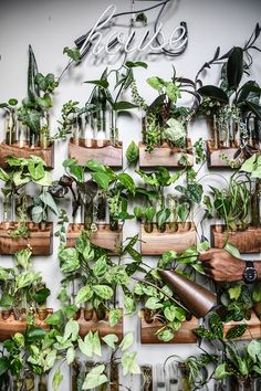Flowers and plants make our house look more beautiful. Here are some recommendations on how to make a beautiful small garden for small space idea. Room With Plants, House Plants Decor, Plant Decor, Plants Are Friends, Plant Wall, Green Plants, Houseplants, Indoor Plants, Planting Flowers