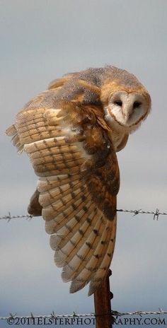 Beautiful owl! ✿⊱╮