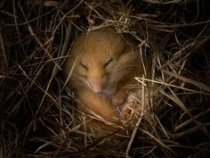 How Hibernation Works...how do animals know when it's time, how they prepare, how their bodies change, etc.