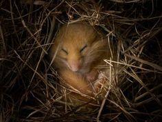 Winter ~ Animals ~ How Hibernation Works