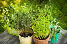 7 Perennial Herbs to Plant Now via @modfarm
