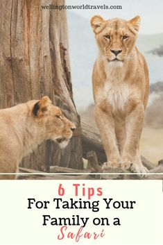 6 Tips for Taking Your Family on a Safari - Wellington World Travels Travel With Kids, Family Travel, Travel Destinations, Travel Tips, Usa Travel, Travel Essentials, Travel Guides, Travel Nursery, Adventure Activities