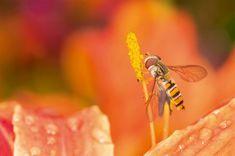 Parole de mouche - La Salamandre