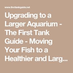 Upgrading to a Larger Aquarium - The First Tank Guide - Moving Your Fish to a Healthier and Larger Home