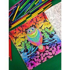 Colori vivaci ✌️ #secretgarden #johannabasford #jardimsecretotop #jardimsecretoinspire #photo #pencil #pencilart #pencildrawing #photooftheday #flowers #colori #colors #colorare #coloring #colouring #coloringbook #iphone5 #instamood #instangood #instadaily #TFLers #tags4tags #secret_garden #secretgardenbook #secretgardencoloringbook #basford #jardimsecretoinspire #jardimsecreto #jardimcolorido #johanna_basford #johannabasfordsecretgarden