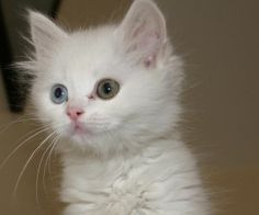 adorable eyes<3