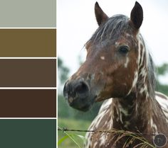 earthy color palettes for #fall Color Schemes Design, Paint Schemes, Color Patterns, Earthy Color Palette, Colour Pallette, Color Combos, Paint Colors For Home, House Colors, Colour Board