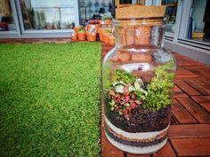 Jar terrarium