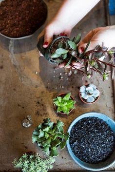 This DIY will teach you to be an urban gardener!