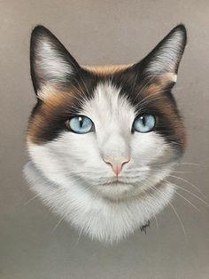 Bird Drawings, Animal Drawings, Drawing Sketches, Chats Image, Magic Realism, Cat Logo, Warrior Cats, Cute Funny Animals, Dog Art