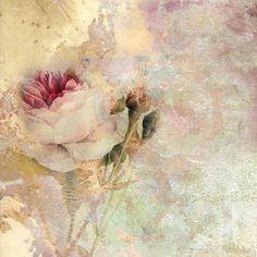 beautiful rose for background, etc....... facilisimo.com