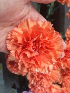 オレンジマジック 2014.06.20ぐらい