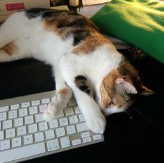 Apparemment notre petite Bobine ne veut pas trop que je travaille :)