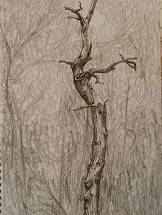 Pen and Ink Tree Bark | , drawn out in pencil then worked into with dip pen and indian ink ...