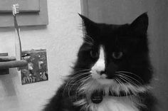 Henri The Existential Cat Is Back