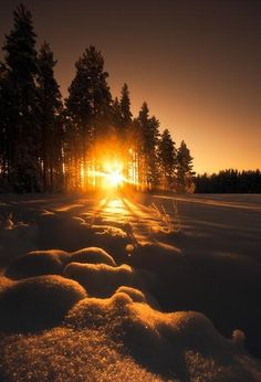 sunset, beautiful, winter, snow, rays, pine forest