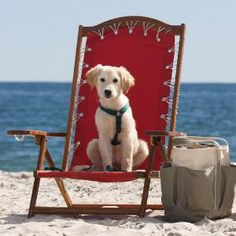 Pets are welcome at the Inn by the Sea in Cape Elizabeth, Maine; coastalliving.com.